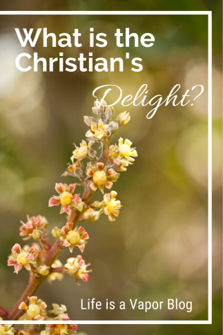 Christian's Delight Pinterest